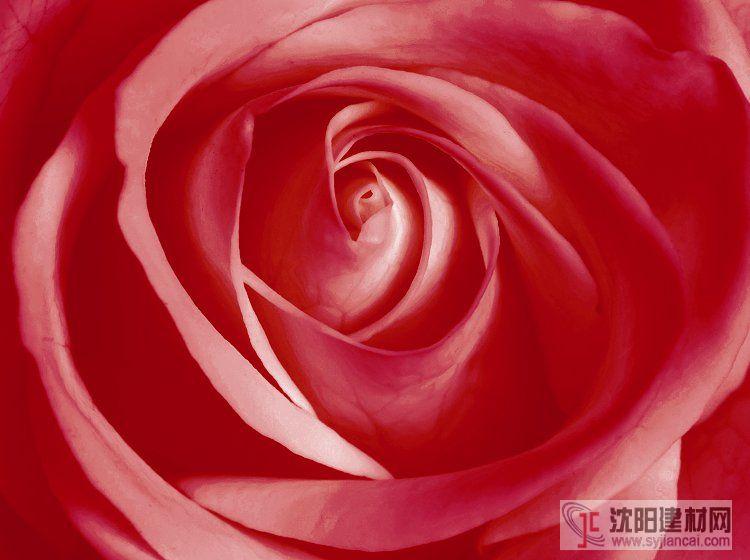 壁画之玫瑰12