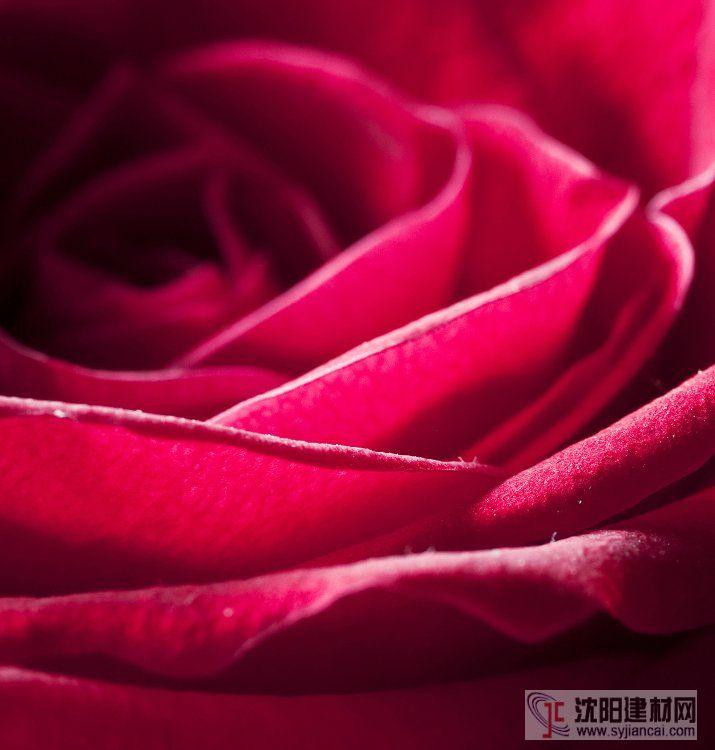 壁画之玫瑰13
