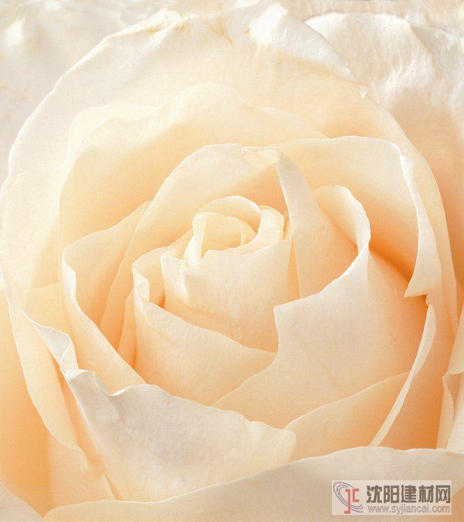 壁画之玫瑰15
