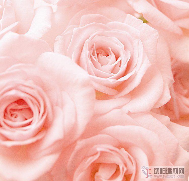 壁画之玫瑰18