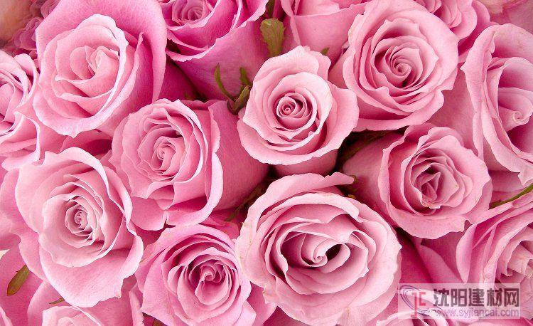 壁画之玫瑰19
