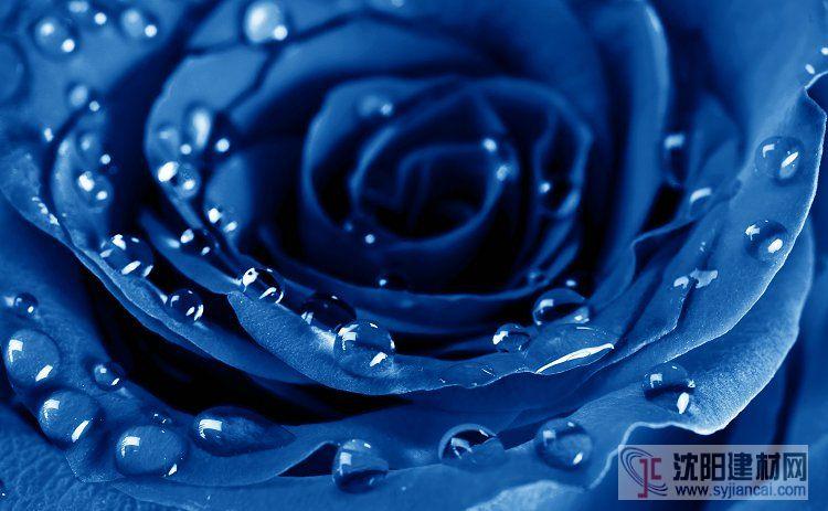 壁画之玫瑰20