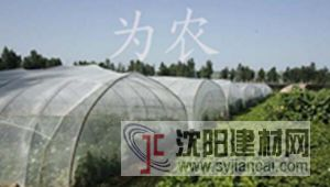乙烯防虫网 塑料防虫网 防虫纱网
